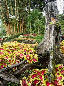 Fra botanisk hage