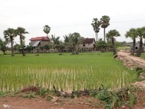 På landsbygda