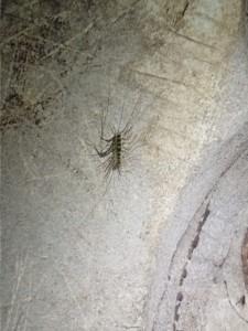 Fra Dark Cave, en av artene som finnes her
