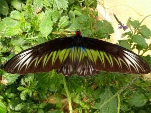 Besøk på sommerfuglfarm