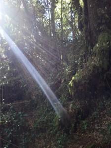 Urskogen (mossy forest)