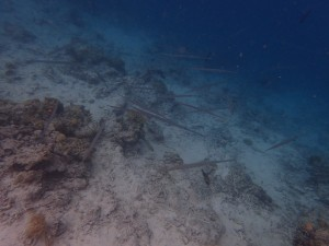 ...en stim med trompetfisk står ved kanten av revet