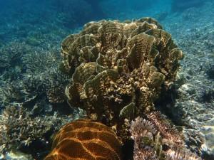 Undervannsbildene er tatt ved Pulau Mantabuan