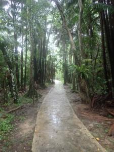 På vei inn i regnskogen