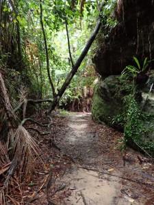 På tur gjennom regnskogen