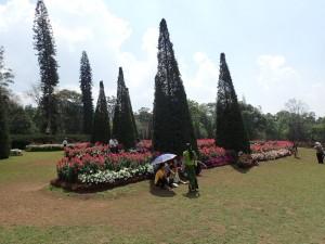 Fra den botaniske hagen