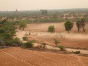 En flokk med kyr og geiter virvler opp støv og sand på den tørre sletta